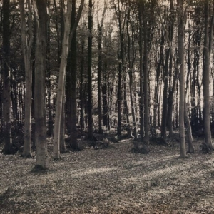 woods-background